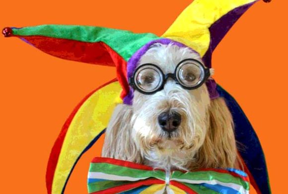 Pacific Street Dog Park – Howl-O-Ween 2016